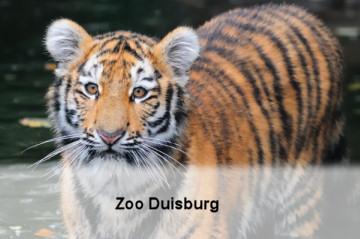 gal-zoo-duisburg